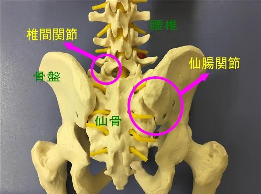 腰痛の治療:名古屋市東区、千種区 天仁接骨院・天仁鍼灸院の強み③